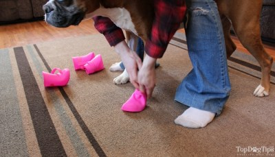 How to put dog booties on your dog