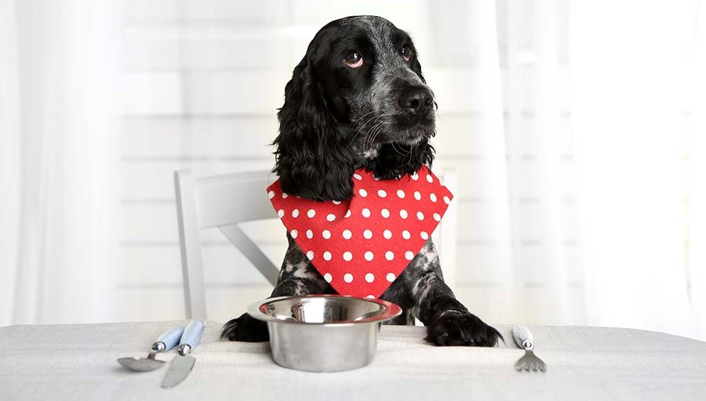 Tips for Making Your Own Homemade Dog Food