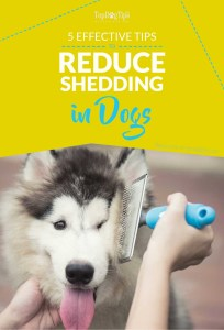 Tips on How to Reduce Shedding in Dogs
