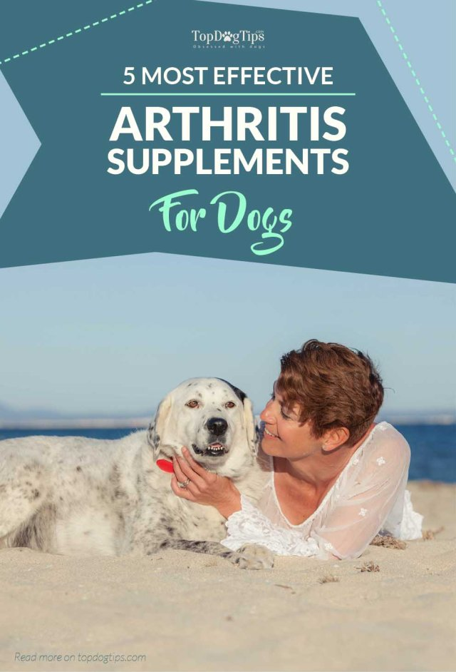 Top Rated Dog Arthritis Supplements
