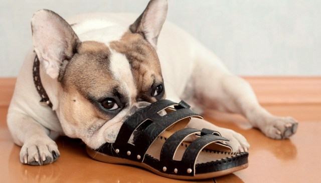 Top Tips for Puppy-Proofing your Home