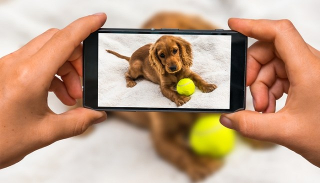 Ways To Promote Your Dog Online