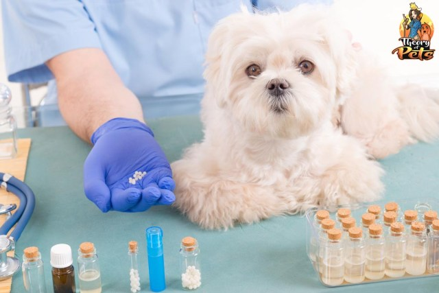 What Is Holistic Vet Medicine Dogs