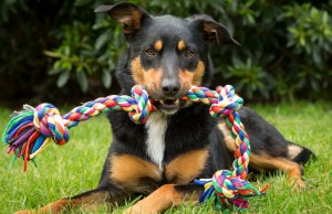 Which Dog Toys Do Veterinarians Recommend.