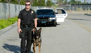 What are the Best Police Dog Breeds for Police Work?