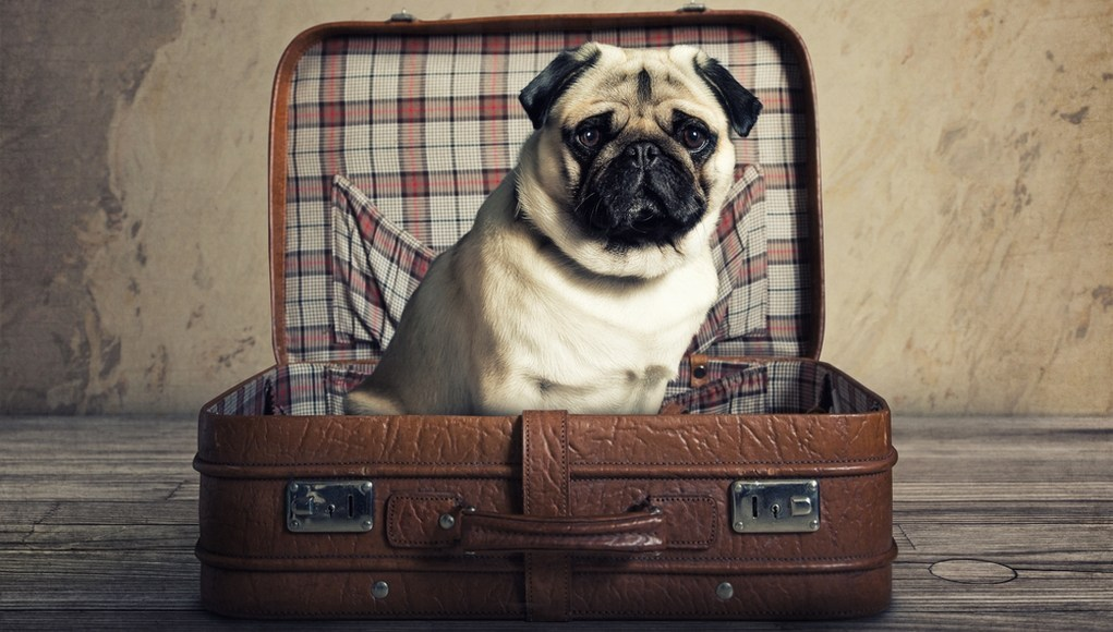 long distance traveling with a dog