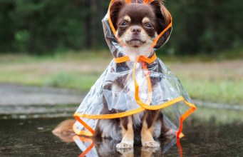 35 Best Dog Raincoats to Keep Your Pet Dry and Warm in Rain