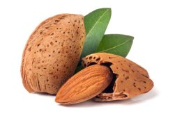 Are almonds good for dogs
