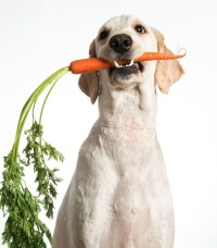 Homemade dog food for overweight dogs