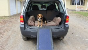 How To Help A Dog Into A Vehicle