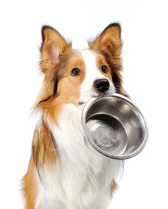 Portion control for overweight dogs