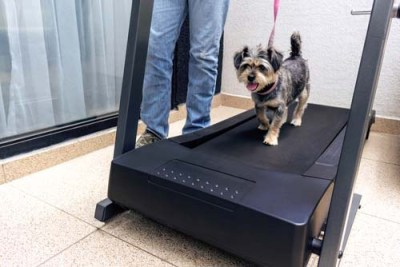 Provide Enough (More) Exercise to Relieve Dog Anxiety