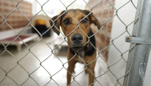 13 Tips for Rescuing a Dog From a Shelter