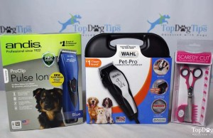 Testing the Best Silent Dog Clippers