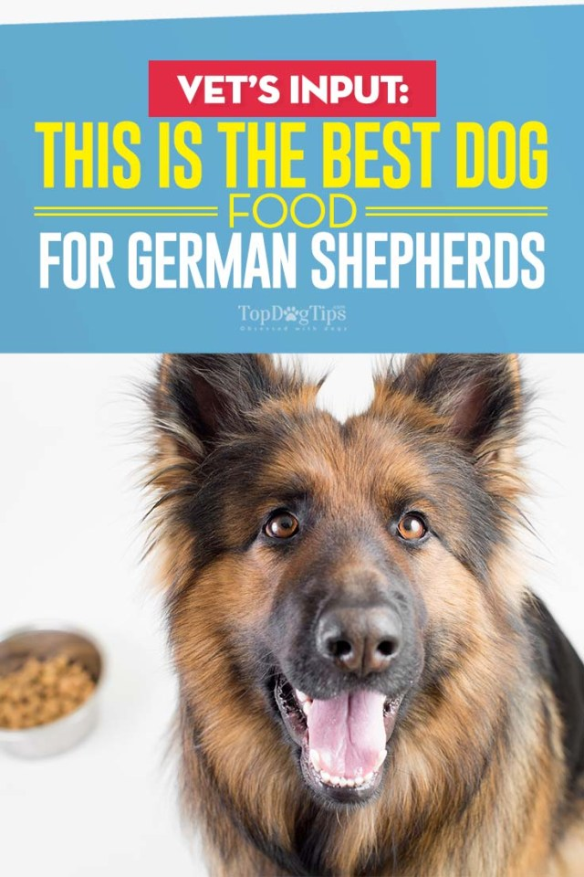 The Best Dog Food for German Shepherds