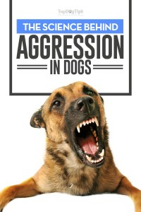 The Science Behind Aggression in Dogs