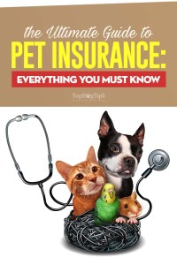 The Ultimate Guide to Pet Insurance
