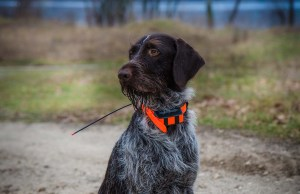 Top 25 Best Dog GPS Collar and Pet Trackers