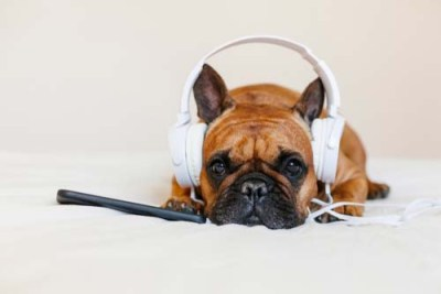 Try Music Therapy for Dog Anxiety