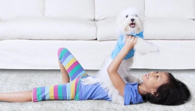 Malteseas the best toy dog breeds