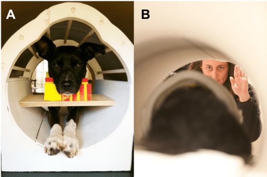 Brain Scans Can Help Choose Better Service Dog Candidates
