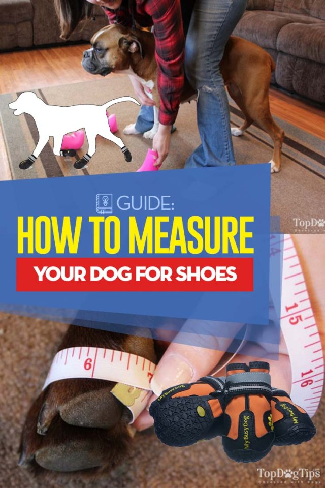 Guide on How to Measure A Dog for Booties