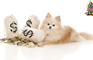 How to Budget and Save Money on Dogs