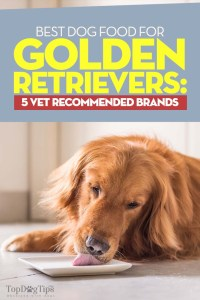 The Best Dog Food for Golden Retrievers