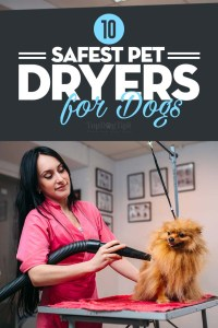 The Best Pet Dryers for Dogs