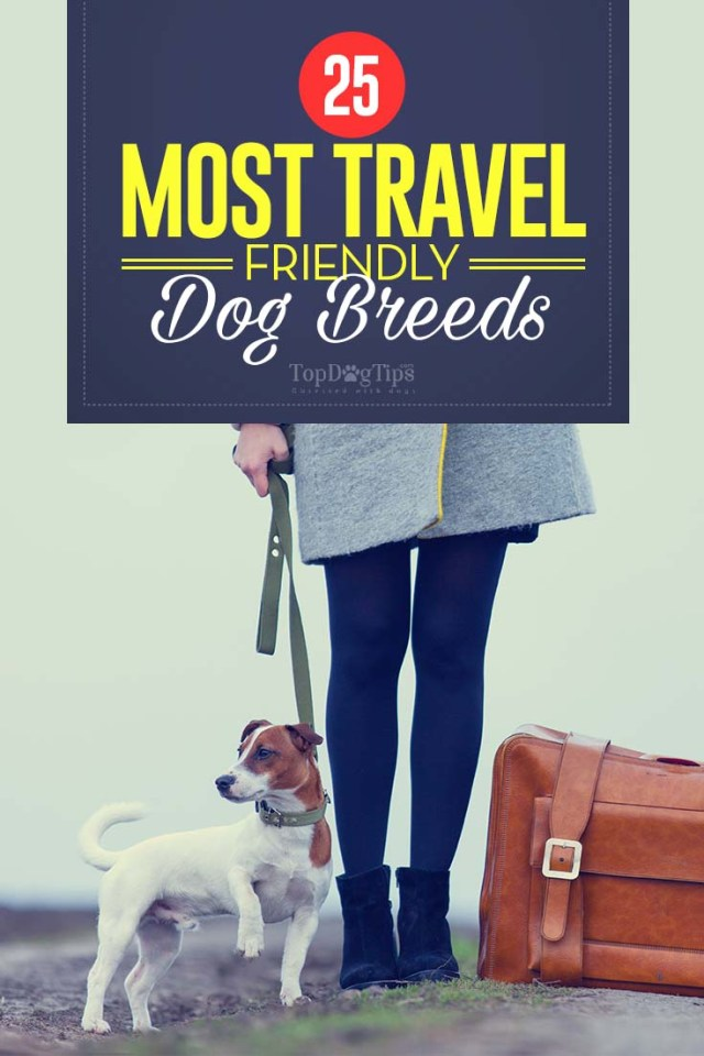 Top Most Travel Friendly Dog Breeds in the World