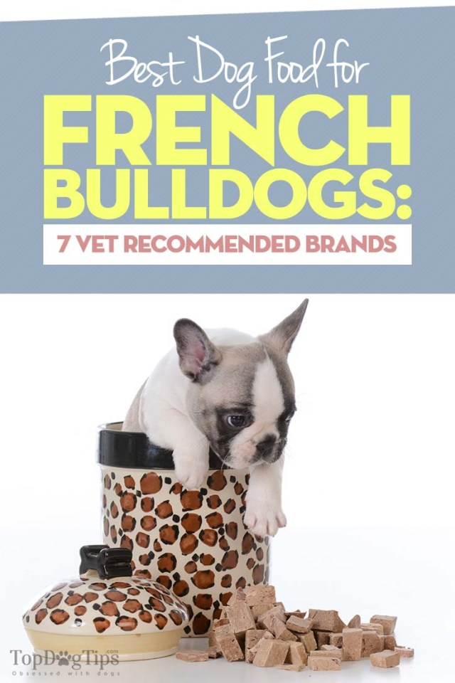 Vet Recommended Best Dog Foods for French Bulldogs