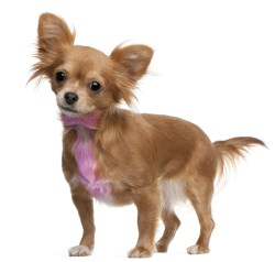 Top Best Dog Hair Bows, Dyes & Accessories