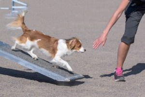 best dog safety ramps