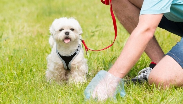 Other Diseases You Can Get From Your Dogs