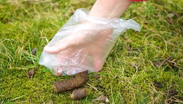 How to Prevent Worms from Being Passed on from Dogs
