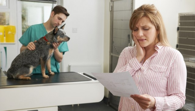 The Ultimate Guide to Pet Insurance What You Should Know to Make a Better Choice