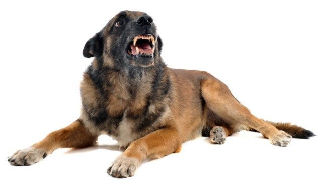 science behind aggression in dogs