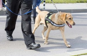 Cadaver Dogs Can Now More Accurately Identify Human Remains