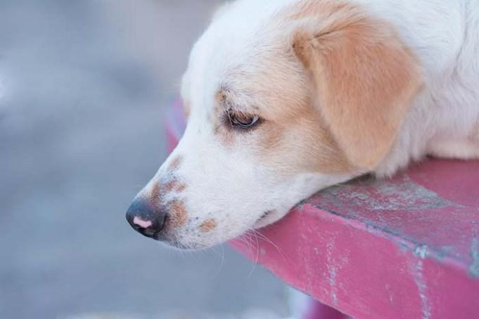 Canine Influenza Outbreak Hits Texas