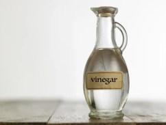 Vinegar for Ear Mites in Dogs