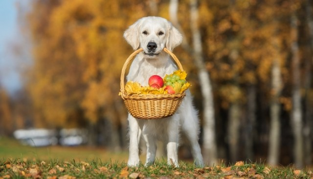 Fruits Dogs Can Eat