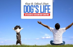 Guide on How to Extend Your Dog's Life by Accurately Assessing Body Condition