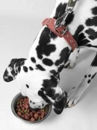 Homemade Dog Food vs Commercial Brands