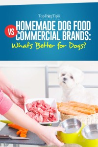 Homemade Dog Food vs Commercial Brands - What Is Better for Dogs