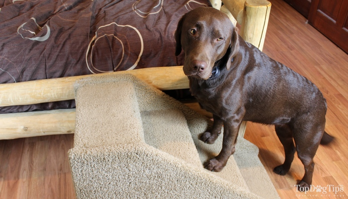 How To Pick the Perfect Dog Steps