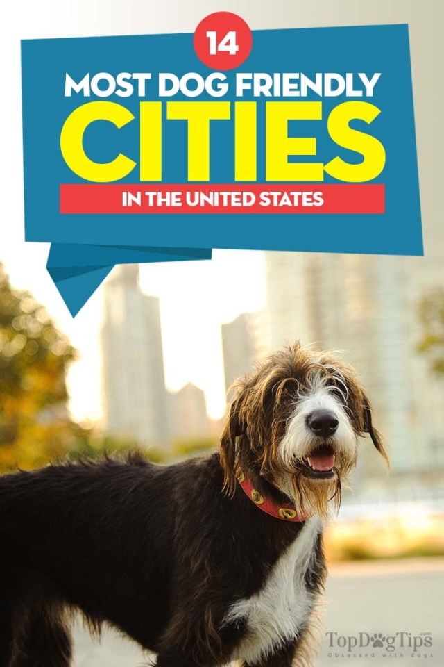 The 14 Most Dog Friendly Cities in the United States
