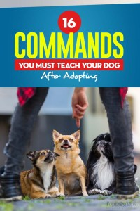 The 16 Commands You Must Teach Your Dog After Adopting