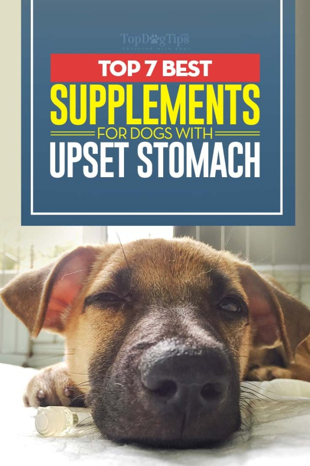 The Best Supplements for Dogs with Upset Stomach