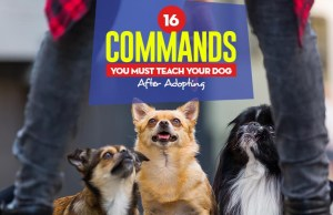 Top 16 Commands You Must Teach Your Dog After Adopting