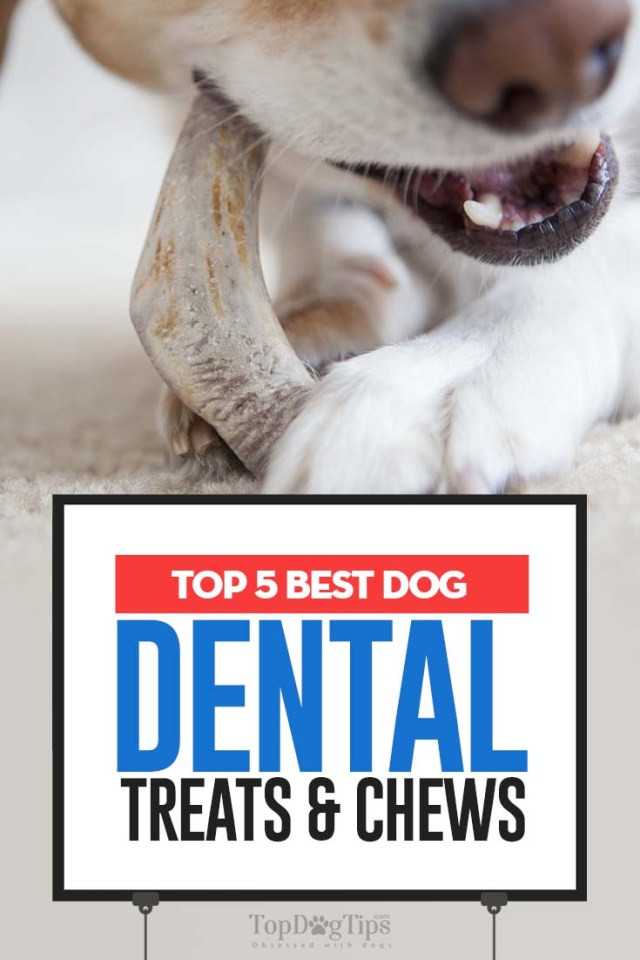 Top 5 Rated Best Dog Dental Treats & Chews
